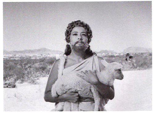 Sylvia w Sheep
