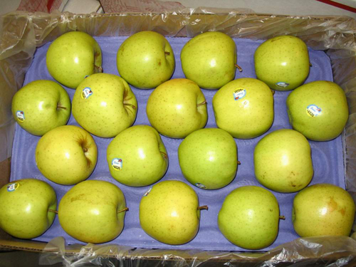 Golden_Delicious_Apples_from_Washington_State_USA