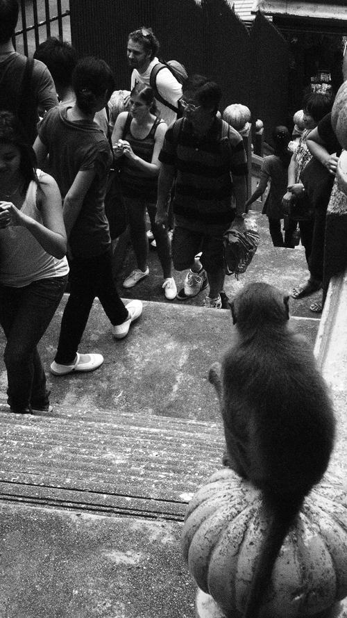 Gargoyle monkey