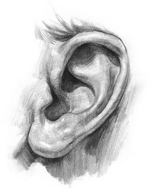 Finished-ear
