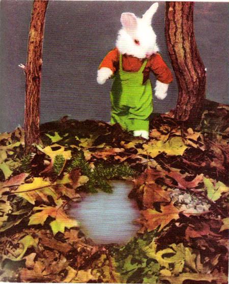 Bunny_woods
