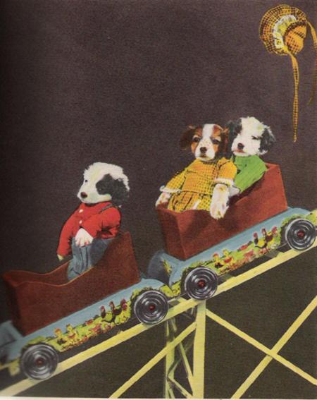 Puppy_rollercoaster